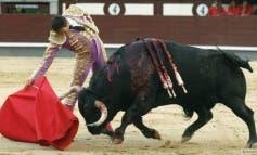 Alcalá de Henares debate sobre los toros en las Ferias 2015