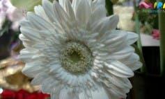 Video- Descubrimos una floristería artesanal de Alcalá de Henares