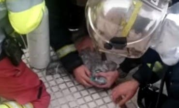 Salvan la vida de un perro tras un incendio en Torrejón