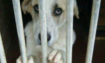 El Ayuntamiento de Alcalá denuncia maltrato en la perrera municipal