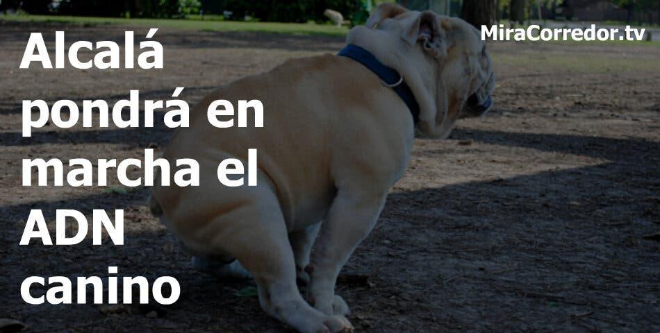 200 euros de multa en Torrejón, hasta 600 euros en Coslada