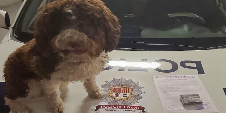 Detenido en Torrejón con 100 gramos de hachís gracias a este perro policía