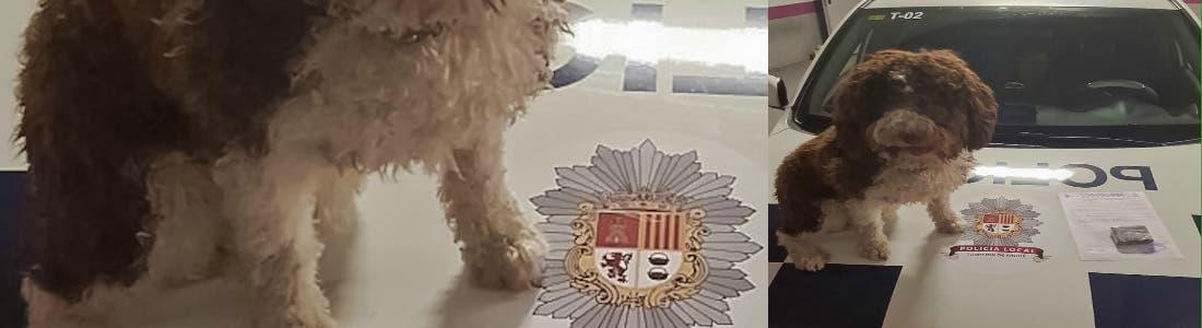 policia-local-torrejon--2