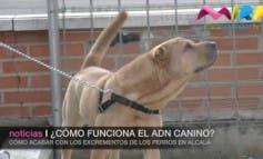 Video- Alcalá podría implantar el ADN canino ¿Cómo funciona?
