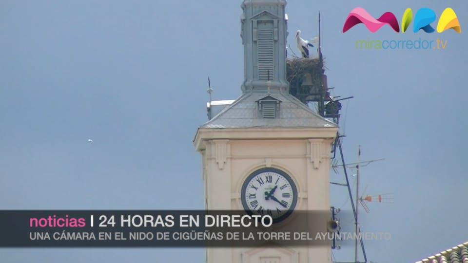 Video- Las cigüeñas de Alcalá 24 horas en directo
