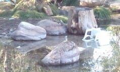 Prohibido bañarse en La Pedriza desde esta primavera