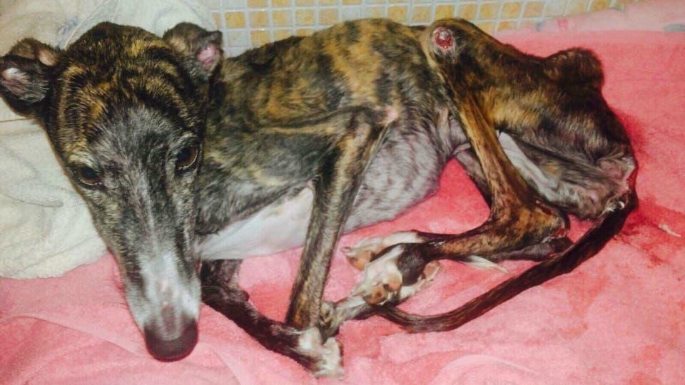Alcalá rescindirá el contrato de la perrera por maltrato