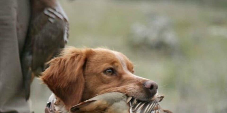Condenados en Alcalá por enterrar viva a su perra