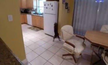 ¿Sabes lo que hace tu perro?