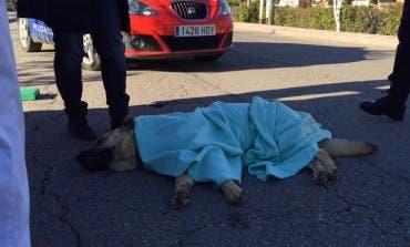 Atropella a un pastor alemán en Velilla y se da a la fuga