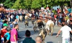 Encierros matinales, infantiles y nocturno en las Fiestas de Torrejón
