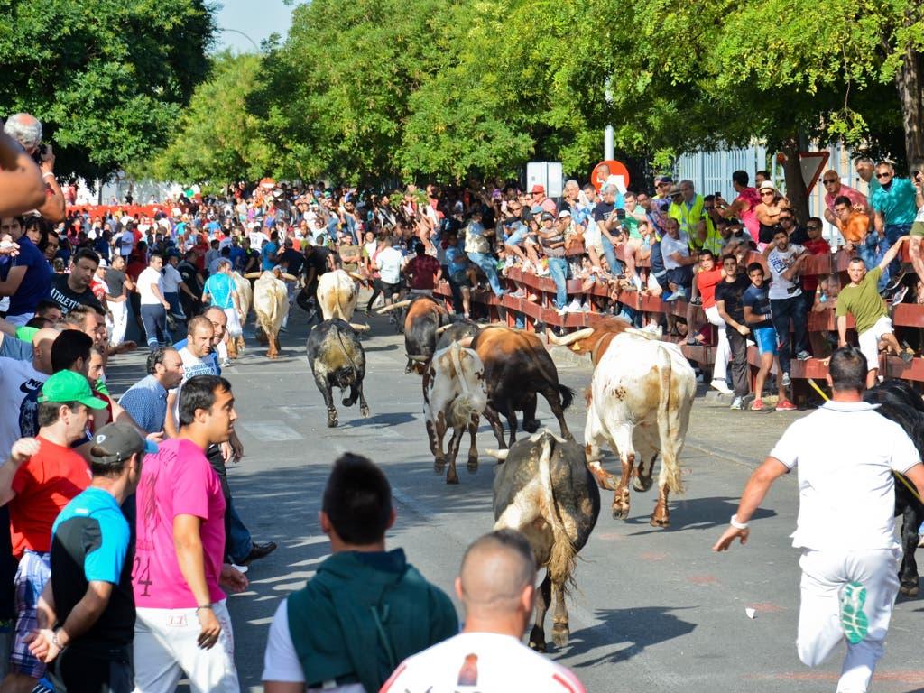 Los tradicionales encierros de Torrejón cambian de horario