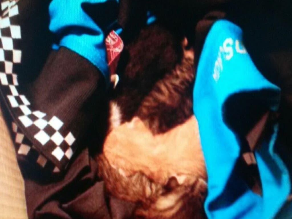 La Policía de Coslada rescata a unos gatitos recién nacidos cerca de un contenedor