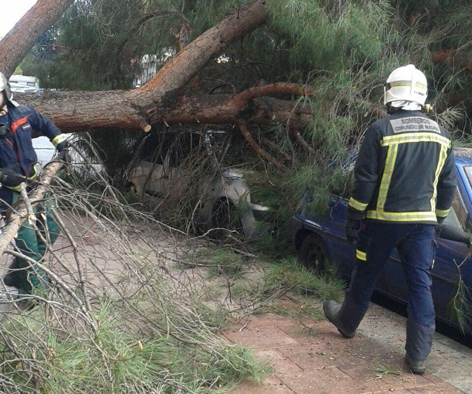 La aparatosa caída de un pino sobre un coche en Torrejón