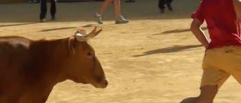 San Fernando de Henares recuperará los festejos taurinos en sus fiestas