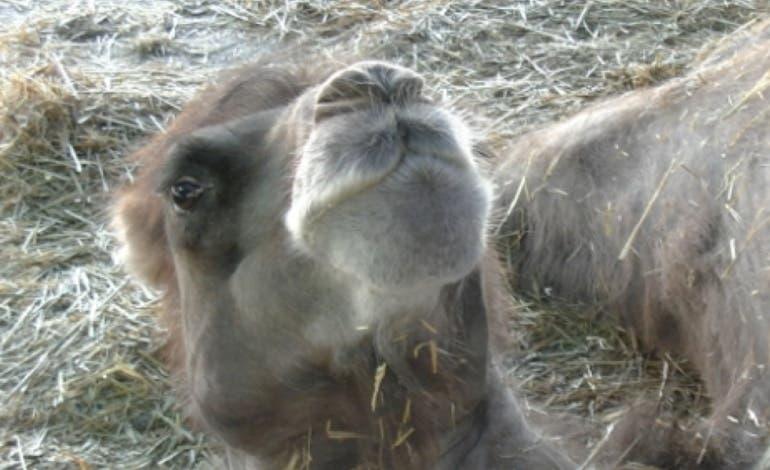 Coslada prohíbe los circos con animales. Entramos en uno de esos circos que no podrán ir a Coslada