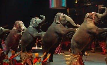 Coslada debate hoy prohibir los circos con animales