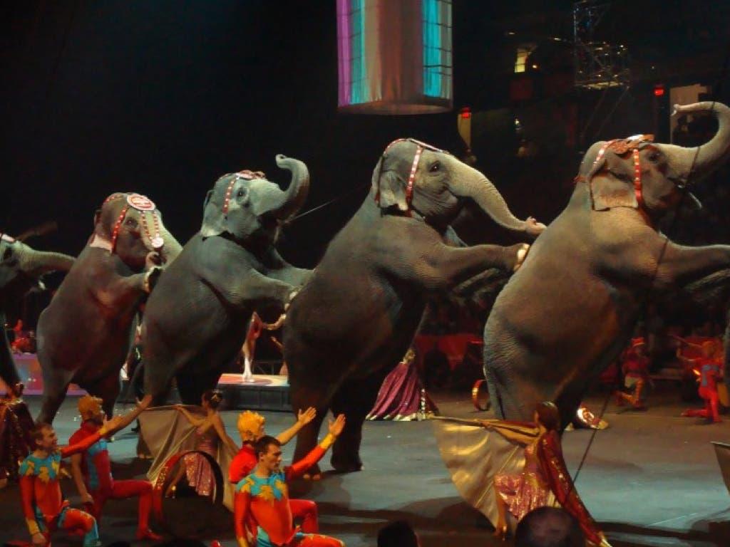 Carmena da un año de plazo a los circos para deshacerse de sus animales