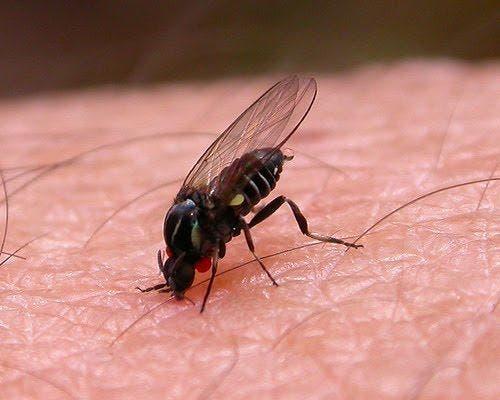 Rivas, Arganda, Mejorada, Velilla y San Fernando exigen medidas contra la mosca negra y los mosquitos