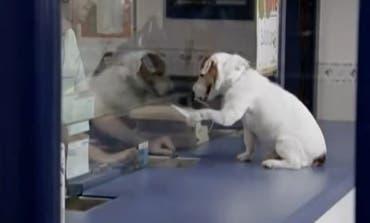 Muere Pancho, el perro del anuncio de la Primitiva