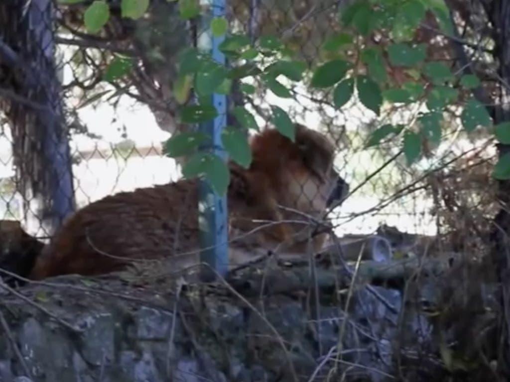 Juzgan en Alcalá a la dueña de una perra que murió abandonada en una finca