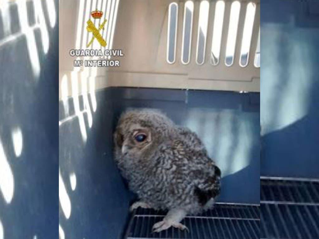 Recuperadas dos aves rapaces protegidas en Guadalajara