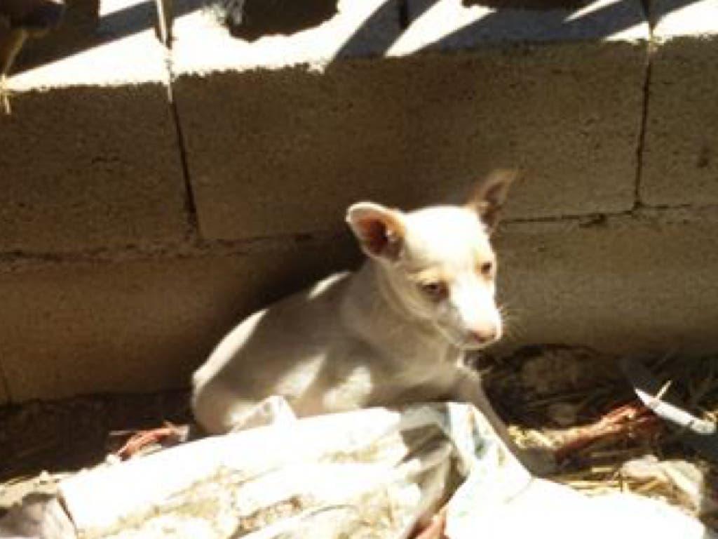 Perros atados a pleno sol, sin agua permanente y con heridas en una finca de Guadalajara