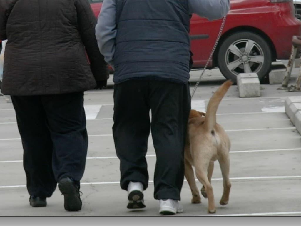 Policías de paisano para pillar in fraganti a quienes no recojan las cacas de su perro en Torres de la Alameda