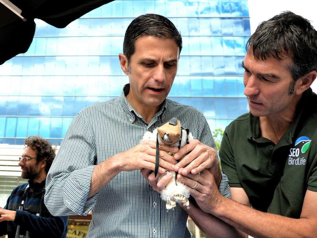 De los creadores del Gran Hermano de las cigüeñas de Alcalá llega… la vida en directo del halcón peregrino