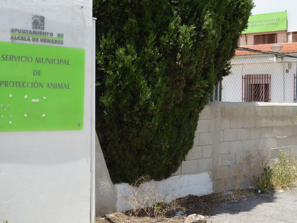 El Ayuntamiento de Alcalá concluye ahora que no hubo maltrato en la perrera
