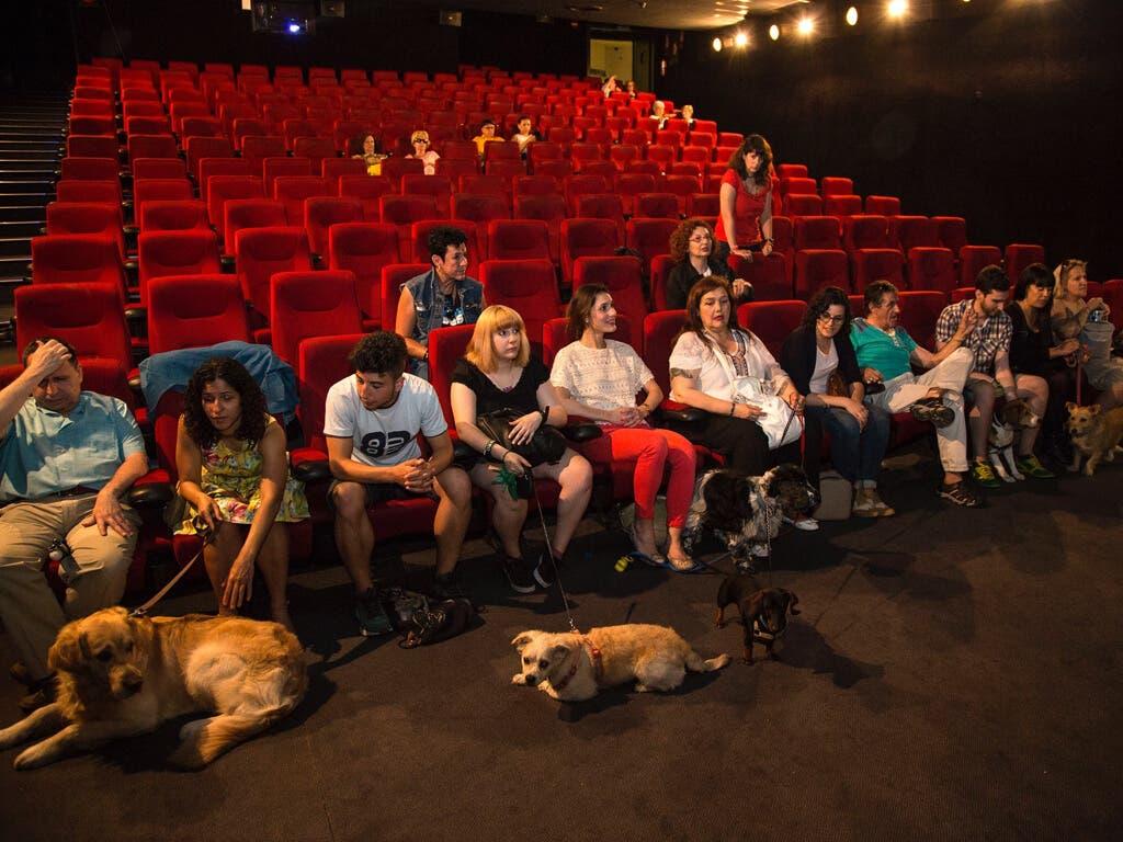Una empresa de Guadalajara quiere que los perros puedan ir al cine con sus dueños