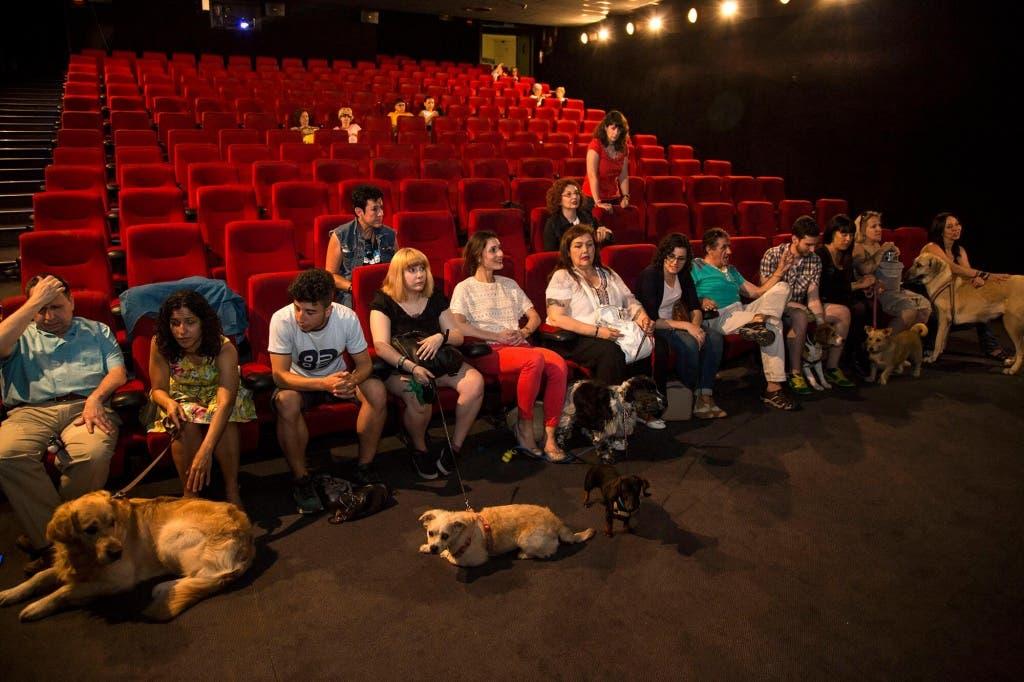 smart-dog-cine-capitol-perros-9