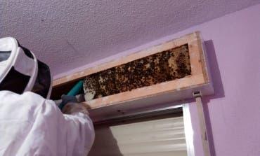 Retiran un enjambre con 10 kilos de miel debajo de una persiana