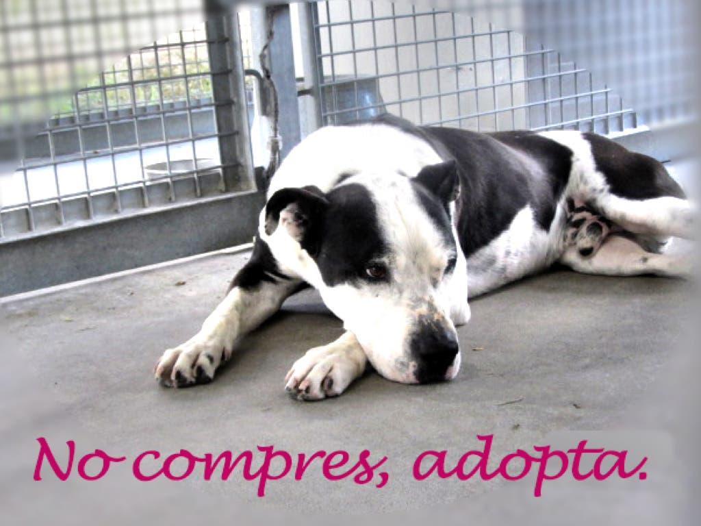 Alcalá lanza una campaña para promover la adopción de animales abandonados