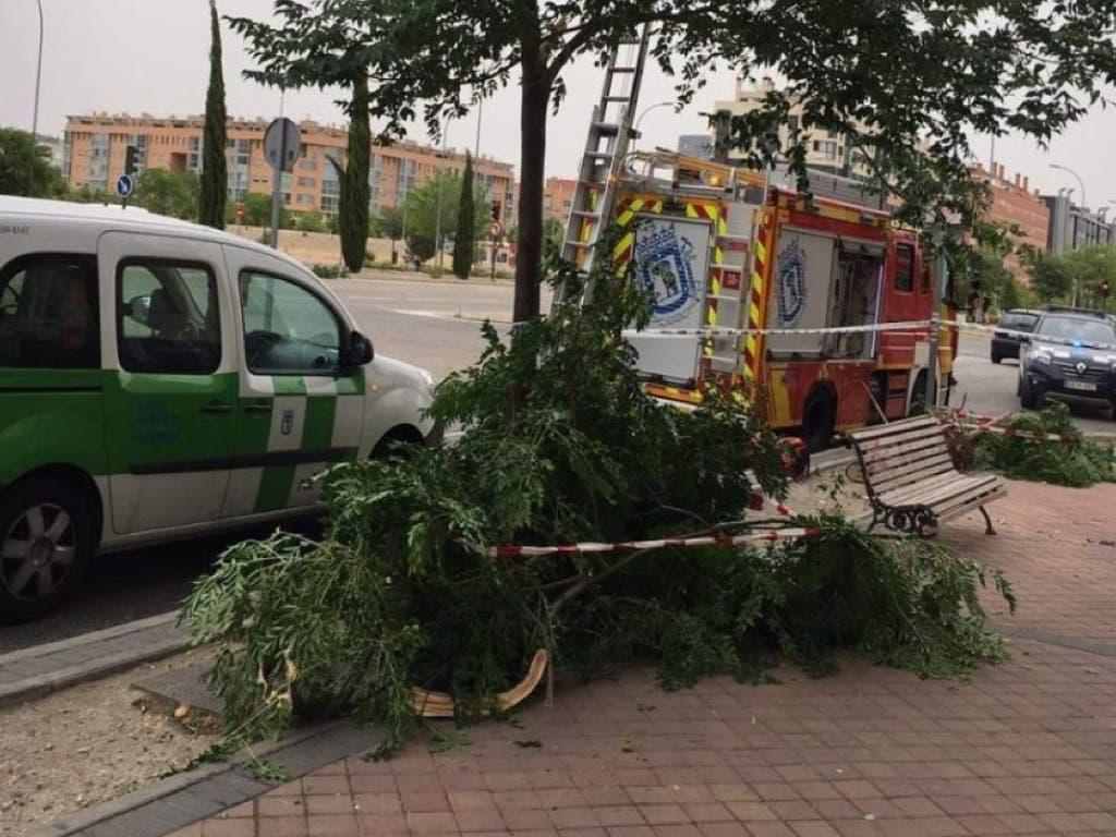 Una mujer herida tras la caída de otro árbol en Madrid