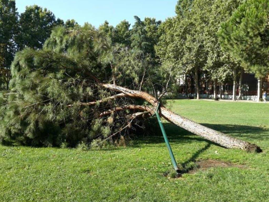 San Fernando encarga un estudio tras la caída de dos árboles y varias ramas