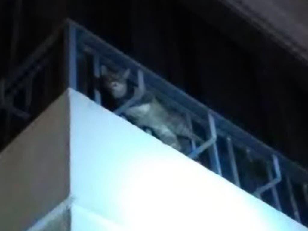 Rescatan a un gato atrapado en un balcón en Azuqueca