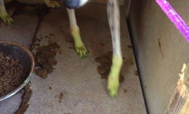 Rescatan a tres perros hacinados en un pequeño zulo en la Cañada Real