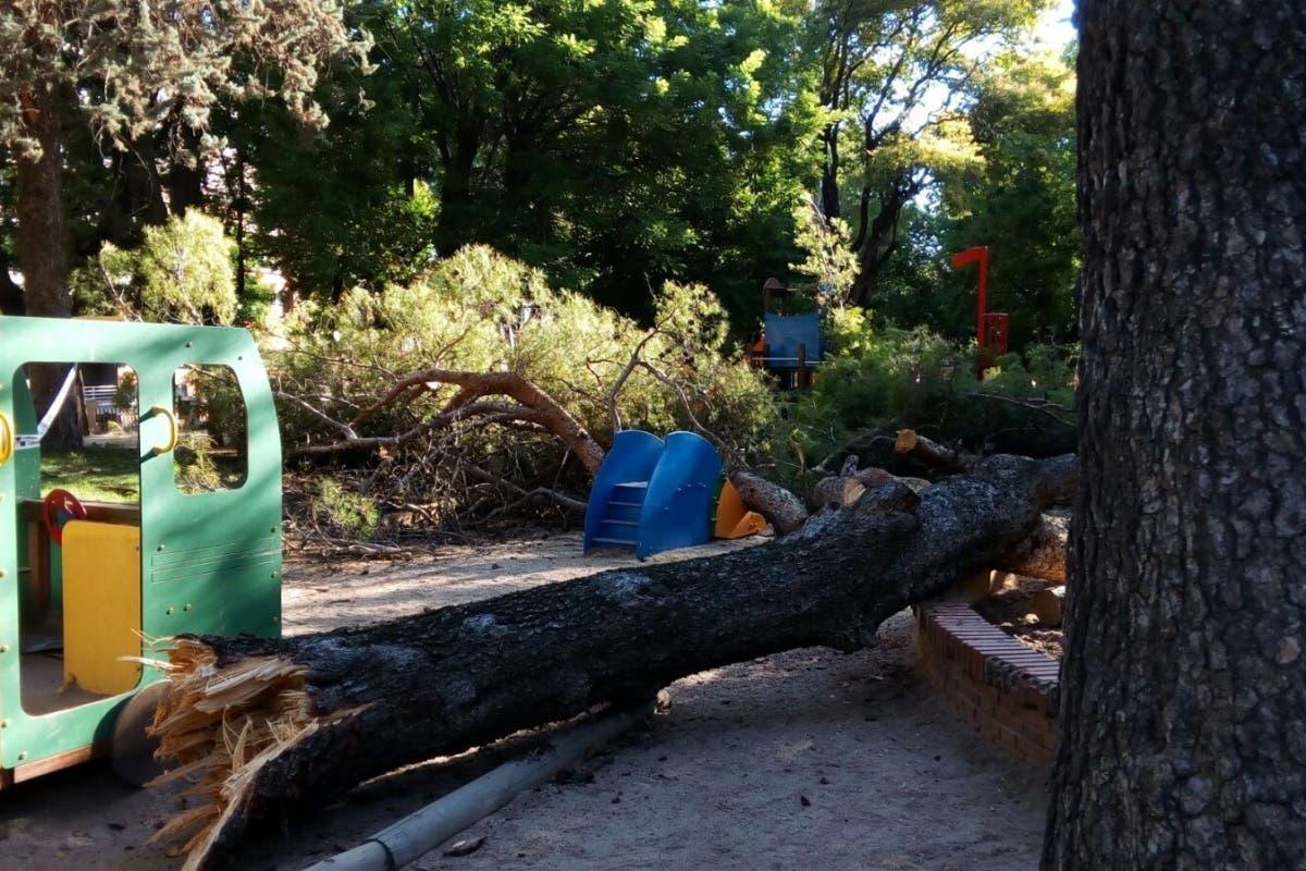 Cae un árbol de grandes dimensiones en una zona infantil de un parque de Guadalajara