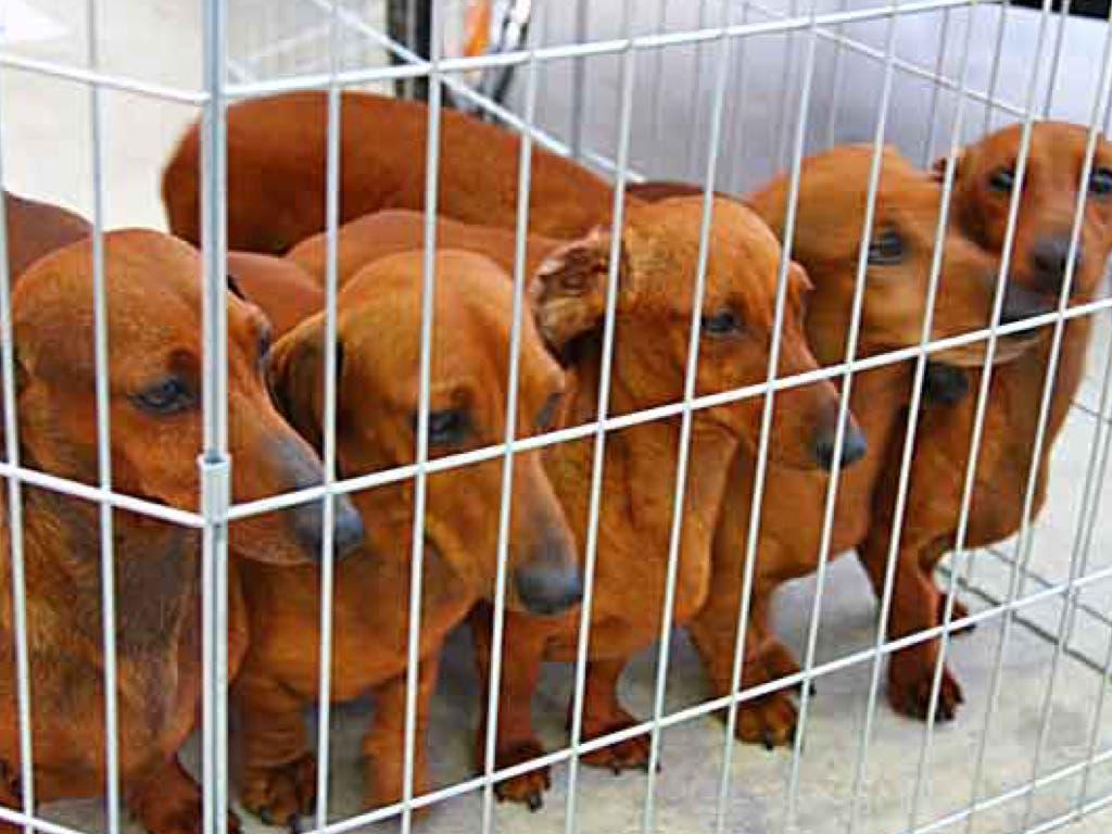 Aprobada la ley que prohibe venta física de perros y gatos en tiendas de la Comunidad de Madrid