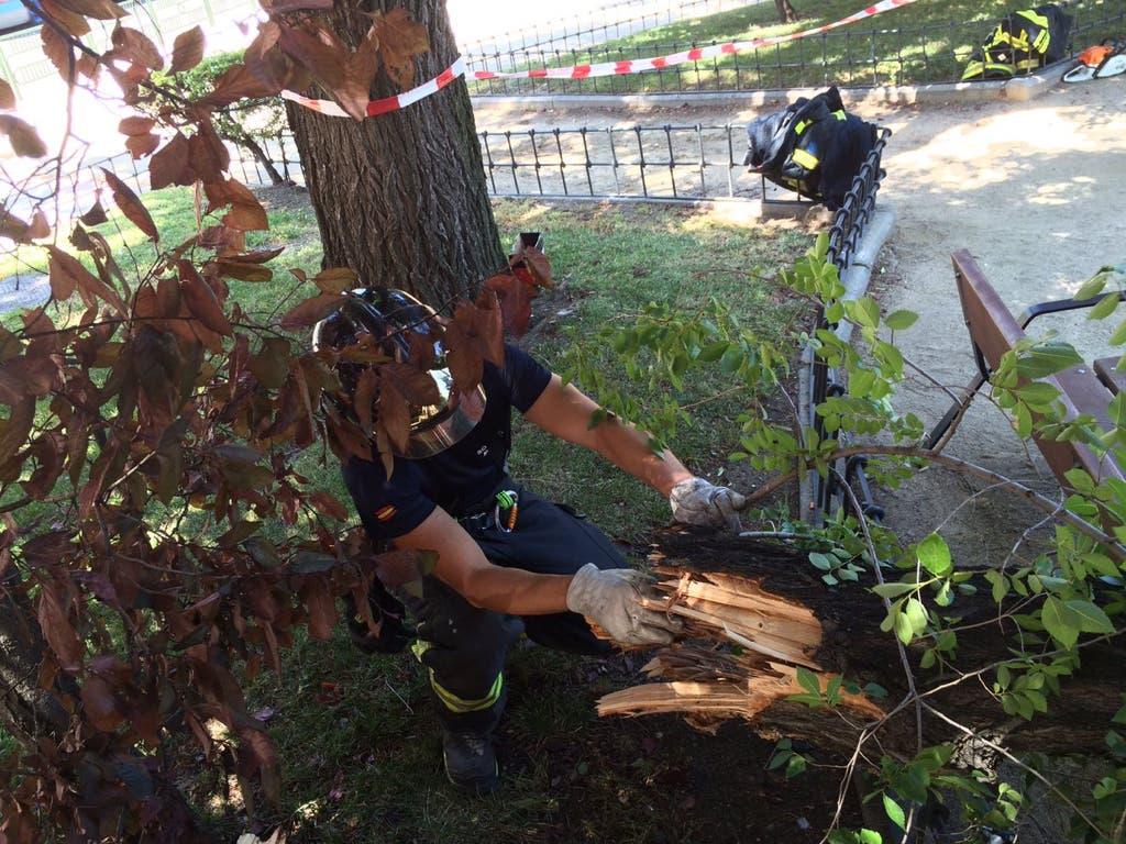 Muere el hombre herido por una rama de árbol en Moratalaz