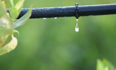 San Fernando denuncia «navajazos» en las tuberías de riego por goteo de algunos parques