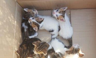 Encuentran siete gatitos en un contenedor de basura en Mejorada del Campo