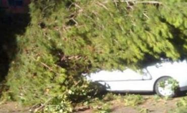 Otro árbol caído en San Fernando de Henares