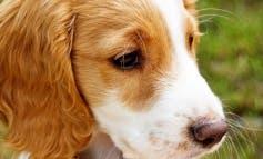 La Comunidad de Madrid prepara un reglamento para proteger a las mascotas