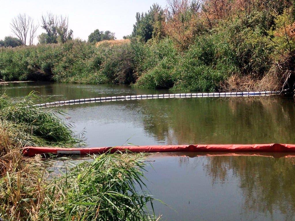 Técnicos municipales de Alcalá analizan los peces muertos aparecidos en el Henares