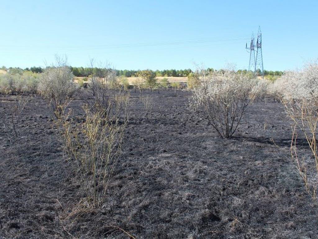 Un incendio provocado arrasa casi 2 hectáreas del Parque del Humedal de Coslada