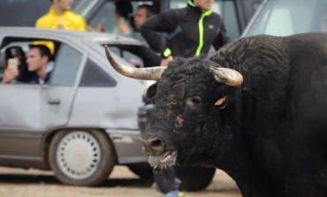 PACMA denuncia en un vídeo varios encierros «brutales» en pueblos de Guadalajara