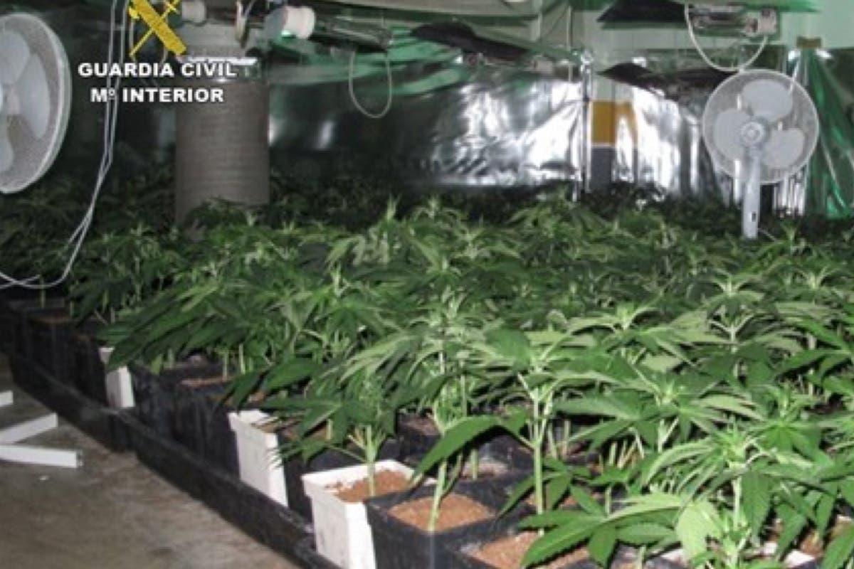 Detenidos por cultivar 950 plantas de marihuana en Cabanillas