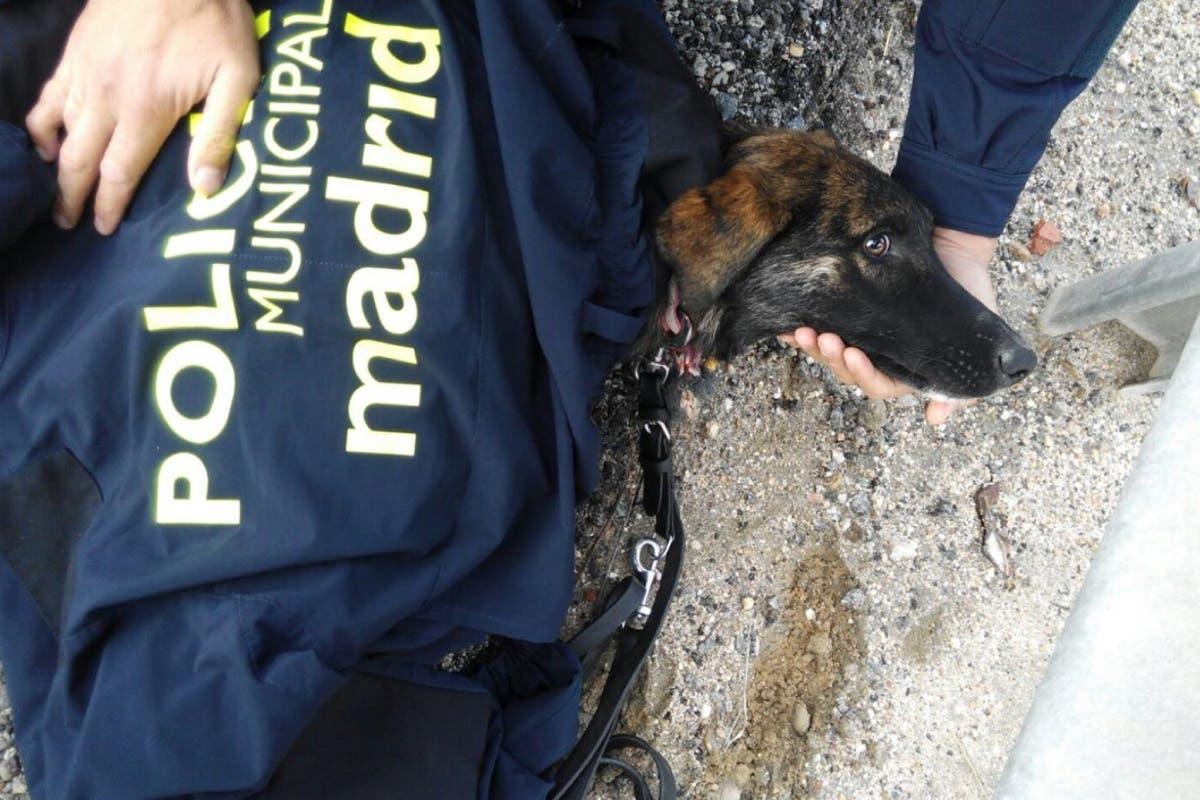 La Policía rescata a un perro atropellado en la M-45